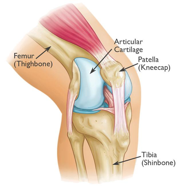 patella joint